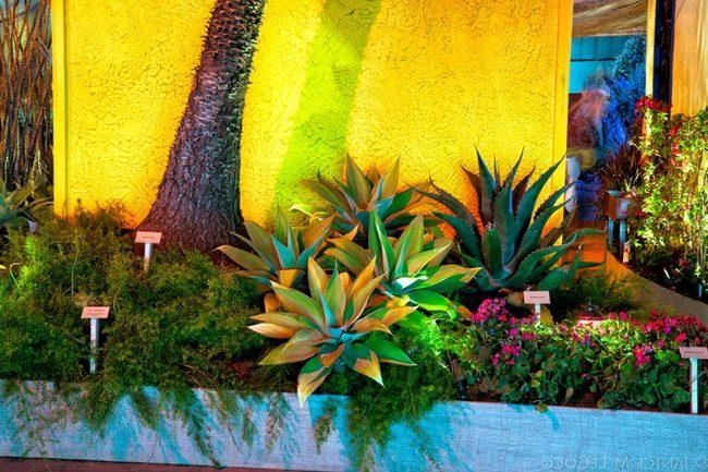 Jardines mexicanos 30 im genes e ideas para inspirarse for Vivero plantas tropicales
